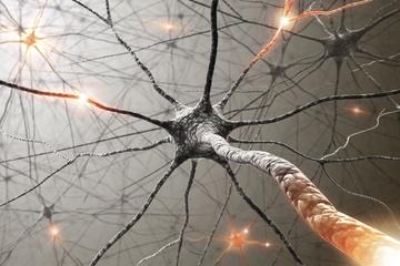 centraal zenuwstelsel fitness