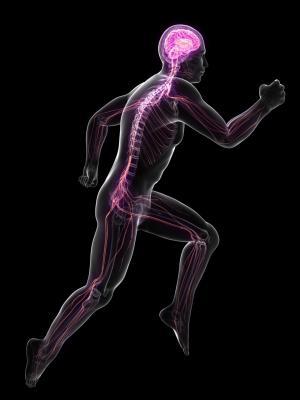 centraal zenuwstelsel krachtsport